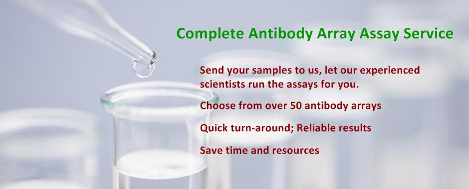 Complete Antibody Array Assay Service