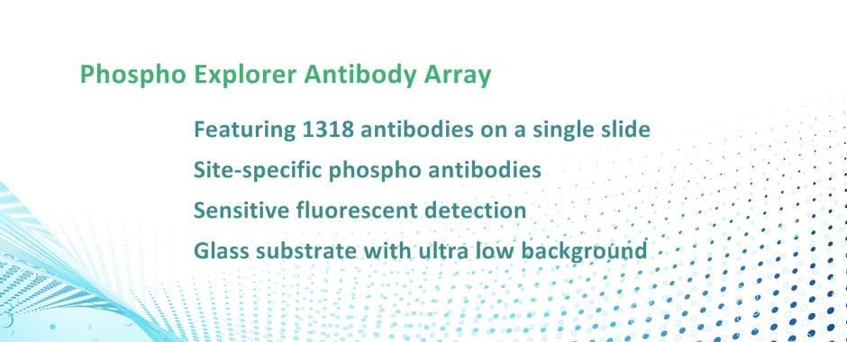 Phospho Explorer Antibody Array